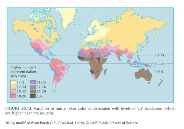 Répartition de la couleur de peau dans le monde
