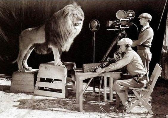 Un cameraman filme un lion