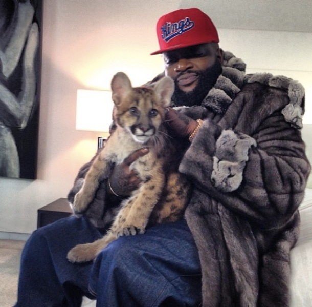 Rick Ross is a hip-hop legend and his Instagram makes the most of that status with crazy amounts of bling tattoos, and art. Yes, you read right, Rick Ross likes to photograph paintings, statues and other fine works that don't pertain to the rap game. Classy. Here's him with a cat that could very well maul him at some point in the future.  : rick ross