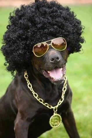 J'AIMERAI REVENIR A L'AFRO MAIS COMMENT FAIRE ? - chien afro