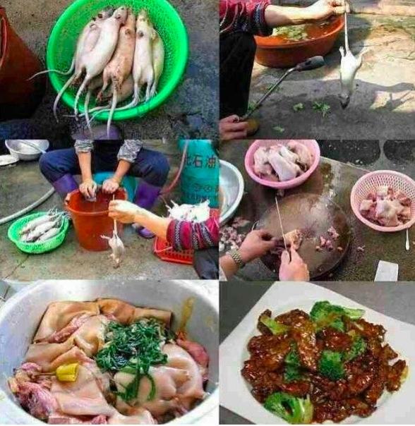 Recette du ragoût de rat (Chine)