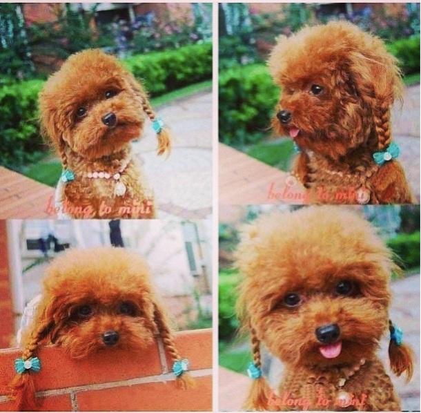 Un chien avec des tresses et couettes